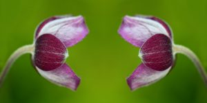 two flowers facing each other